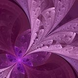 Beautiful fractal flower in vinous and purple. Computer generate Royalty Free Stock Photography