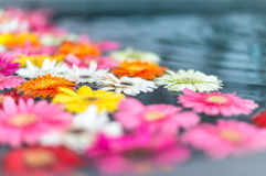 Beautiful multicolored flowers in water. Stock Image