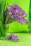 Beautiful, fragrant flowers announce spring. Spring is here ... wonderful smell of hyacinth in my garden Royalty Free Stock Images