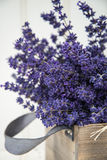 Beautiful fragrant lavender bunch in rustic home styled setting Stock Photo