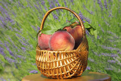 Beautiful fragrant peaches in basket Royalty Free Stock Photo