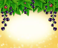 Beautiful frame of blackcurrant Stock Images