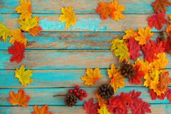 Beautiful frame composed of autumn maple leaves with pine cones, berry and acornon wood plank. Nature fall season background royalty free stock image