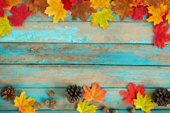 Beautiful frame composed of autumn maple leaves with pine cones on wood plank. Nature fall season background royalty free stock photography