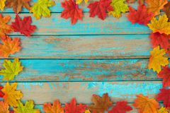 Beautiful frame composed of autumn maple leaves on wood plank. Nature fall season background royalty free stock images