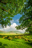 Beautiful frame made by meadow and big trees in District Lake, UK. Beautiful frame made by meadow and big trees in District Lake, England royalty free stock photo