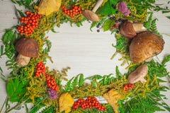 Autumn still life of mushrooms royalty free stock image