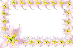 Beautiful frame of pink lilies isolated on a white background Royalty Free Stock Image