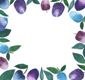 Beautiful frame plums watercolor hand sketch Royalty Free Stock Images