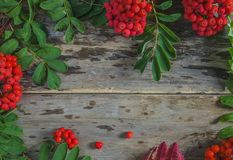 Beautiful frame of ripe rowanberries with leaves. On old wooden background stock photography