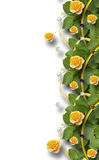 Beautiful  frame of roses, leaves, ribbons and pearls Royalty Free Stock Images