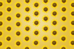 Beautiful frame sunflower background texture wallpaper Royalty Free Stock Image
