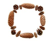 Beautiful frame  from various fir cones Stock Images