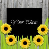 Beautiful framework for photo with sunflowers Royalty Free Stock Photos