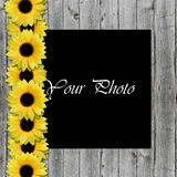 Beautiful framework for photo with sunflowers Royalty Free Stock Image