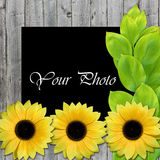 Beautiful framework for photo with sunflowers. And leaves Royalty Free Stock Photo