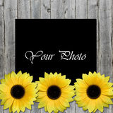 Beautiful framework for photo with sunflowers Royalty Free Stock Photography