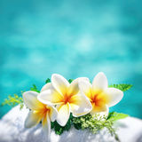 Beautiful frangipani flowers. Frangipani flowers border over blue water background, spa still life, travel and tourism, conceptual photo of a summer vacation Stock Photo
