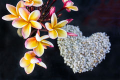 Beautiful frangipani flowers bunch on dark background and blurre Stock Image