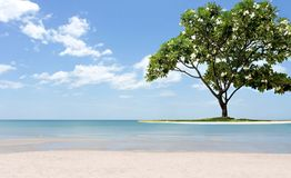 Beautiful frangipani tree on the beach white sand and ocean. In blue sky Stock Photo