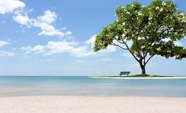Beautiful frangipani tree with chair on the beach white sand and. Ocean  in blue sky Royalty Free Stock Photo