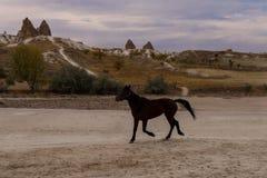 Beautiful free horse runs among stone sculptures stock photos