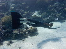 Beautiful freediver girl swims along coral reef. Of Red Sea royalty free stock images