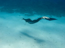 Beautiful freediver girl swims along sea bottom Royalty Free Stock Photos