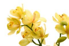 Beautiful freesia flowers. stock images