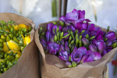 Beautiful freesia flowers bouquet. Beautiful blue freesia flowers bouquet Stock Image