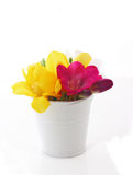 Beautiful freesia flowers  in bucket Royalty Free Stock Images