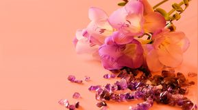Beautiful freesias and amethysts. Fresh lilac coloured freesias and amethyst gems on pink background, plenty of copyspace for greetings cards etc Stock Image