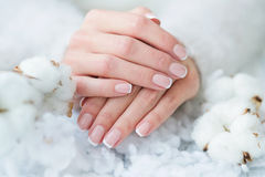 Beautiful French manicure and cotton flower Stock Photo