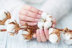 Beautiful French manicure and cotton flower Stock Photos