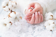 Beautiful French manicure and cotton flower Stock Image