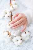 Beautiful French manicure and cotton flower Royalty Free Stock Images