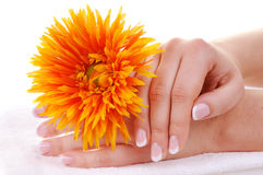 Beautiful french manicure and flower. Female hands with nice french manicure and a flower on white towel Royalty Free Stock Photo