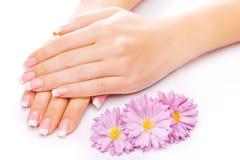 Beautiful french manicure on white Stock Photo
