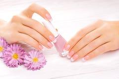Beautiful french manicure on white Royalty Free Stock Image