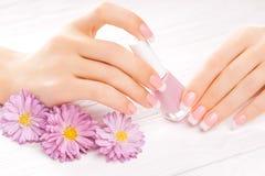 Beautiful french manicure on white Stock Image