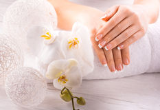 Beautiful french manicure with white orchid royalty free stock photography
