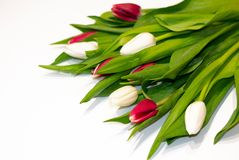 Beautiful fresh bouquet of tulip flowers isolated on white background with copy space stock images