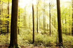 Beautiful fresh bright forest Royalty Free Stock Image