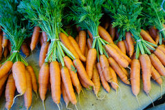 Beautiful fresh bundles of carrots for sale. This photo was take at the Durango Farmers Market. Fresh carrots in neat bundles on sack cloth Royalty Free Stock Photo