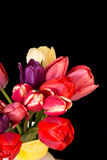 Beautiful Fresh Cut Tulips. A vase full of fresh cut spring tulips Royalty Free Stock Images