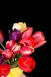 Beautiful Fresh Cut Tulips Royalty Free Stock Images