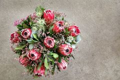 Beautiful fresh flower arrangement of Protea macrocephala flowers. Beautiful fresh flower arrangement of Protea macrocephala flowers floral background with copy stock photos