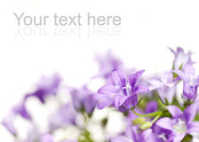 Beautiful fresh flowers Stock Photography