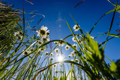 Beautiful fresh flowers under sunlight in the woods from below. View up stock photos