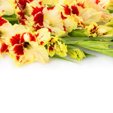 Beautiful fresh gladiolus isolated square background Royalty Free Stock Photography